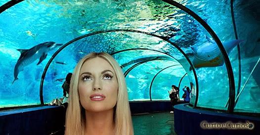 Incrível e gigantesco: Conheça o maior aquário do mundo