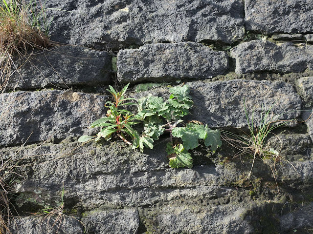 Plants and grass growing on a blackened stone wall.