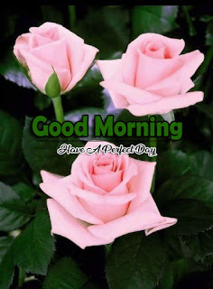 New Good Morning 4k Full HD Images Download For Daily%2B75