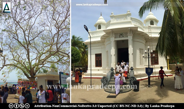 The Bodhi tree and the image house