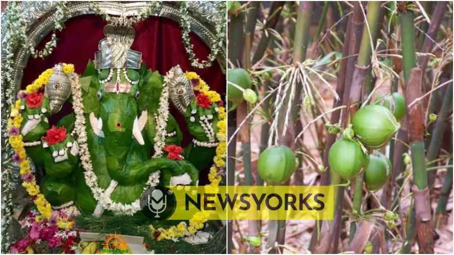 இந்த 5 மரங்களில் ஏதாவது 1 உங்கள் வீட்டில் இருந்தால் போதும்  நீங்கள் அதிர்ஷ்டசாலி தான் !!