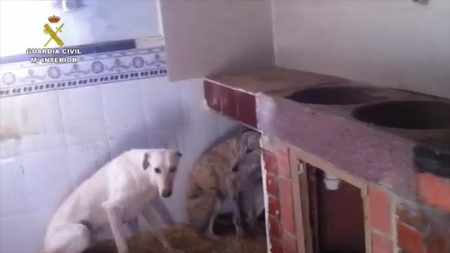 La Guardia Civil detiene a dos hombres como presuntos autores de un delito de maltrato animal