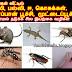 வீட்டில் பூச்சி வராமல் தடுக்க சில இயற்கை வழிகள் - Veettil poochi varaamal thadukka sila iyarkai vazhigal