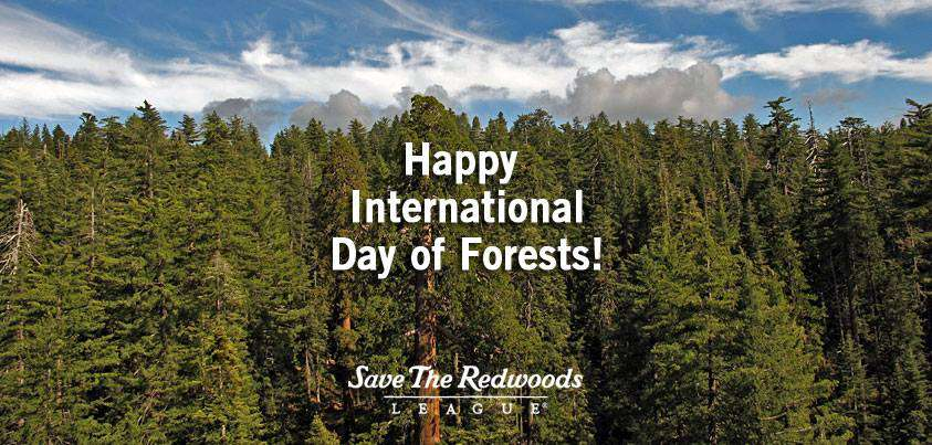 International Day of Forests Wishes Sweet Images