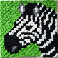Zebra C2C Square