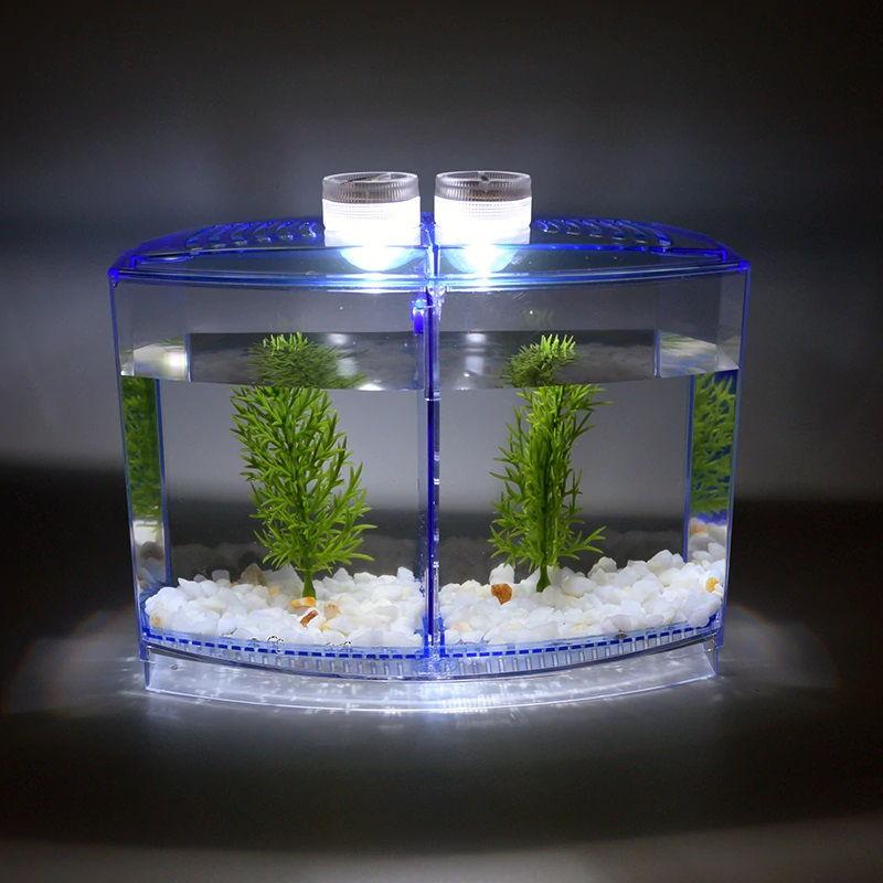 Betta Fish Care Lighting Photo