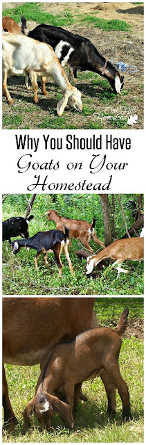 All the benefits of having goats on your farm or homestead. | from Oak Hill Homestead