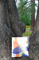 Kirja puun oksanhaarassa, taustalla lisää puita