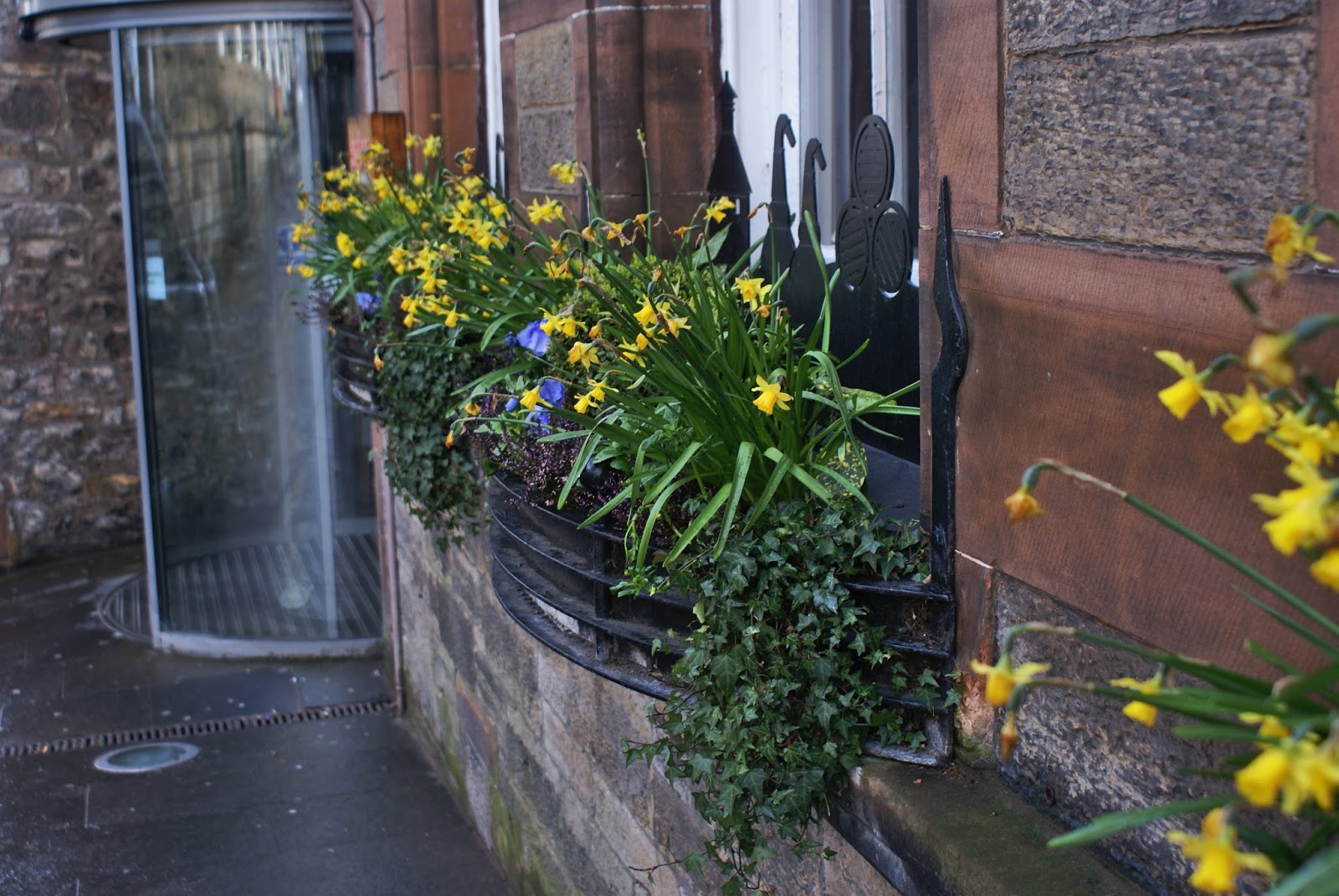 edinburgh scotland uk high street royal mile flowers