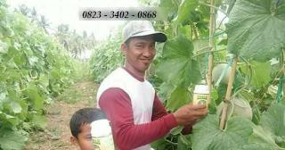 AGEN NASA DI Dolok Sanggul, Humbang Hasundutan - TELF 082334020868