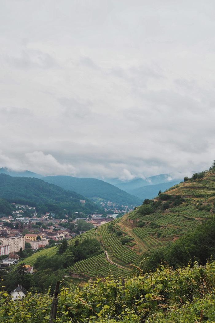 Visiter les vignobles de Schlumberger à Guebwiller en Alsace