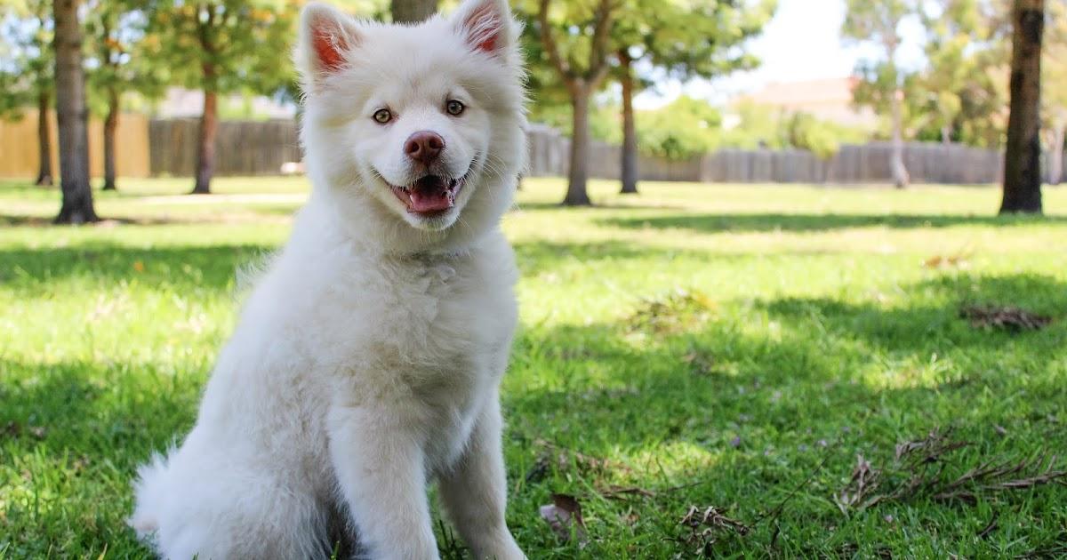 World Unique Female Dog Names A 2020