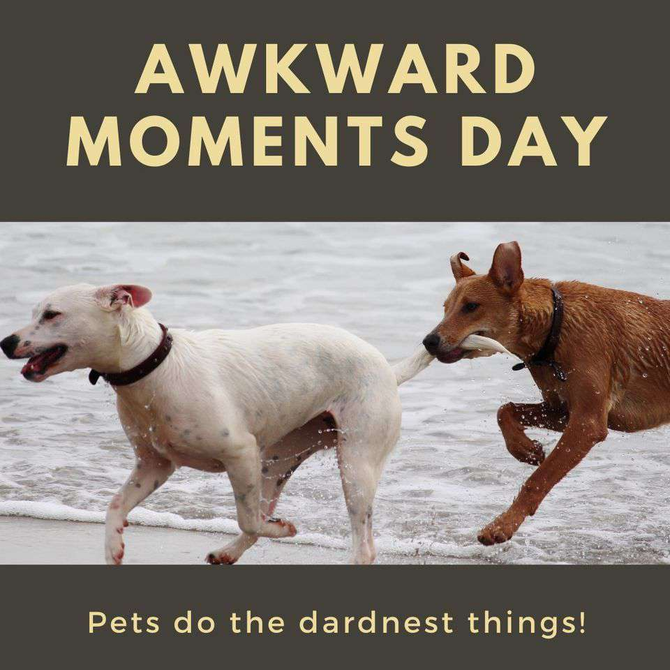 Awkward Moments Day Wishes Images