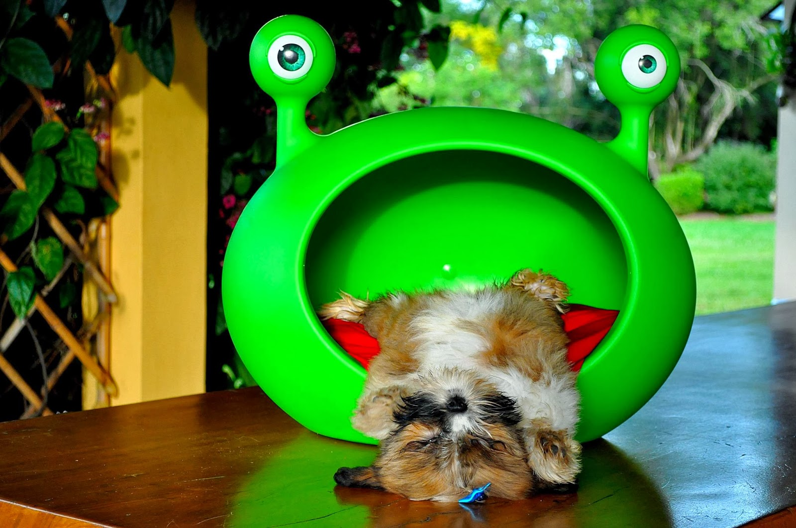 Guisapet Creative Beds For Cats And Dogs It S A Pet S Life