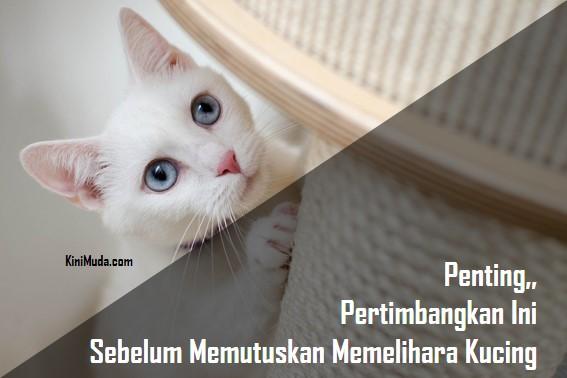 Penting, Pertimbangkan Ini Sebelum Memutuskan Memelihara Kucing