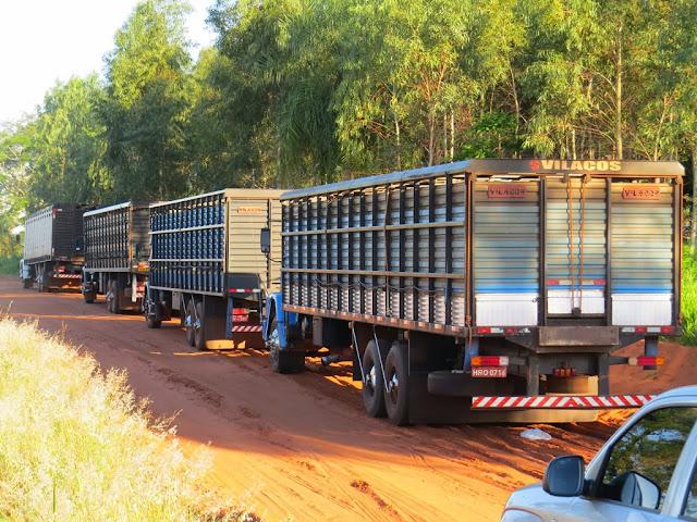 Transporte de gado MG