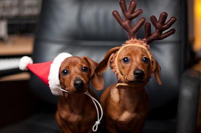 photo drôle noel chiens