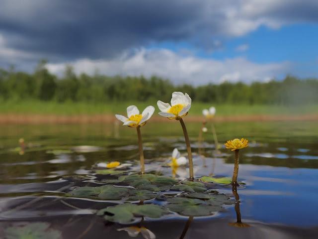 Kukkia kurkottaa vedenpinnan päälle, taustalla dramaattisen mustat pilvet