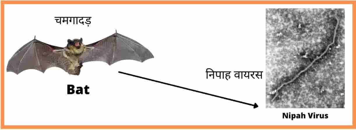 Nipah Virus Vaccine Name In Hindi