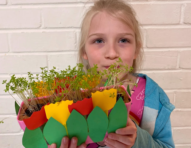 The same planter with fully grown cress, a girl is holding it and going for a munch