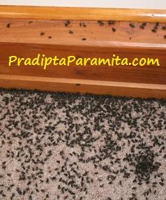 cara membasmi lalat rumah makan