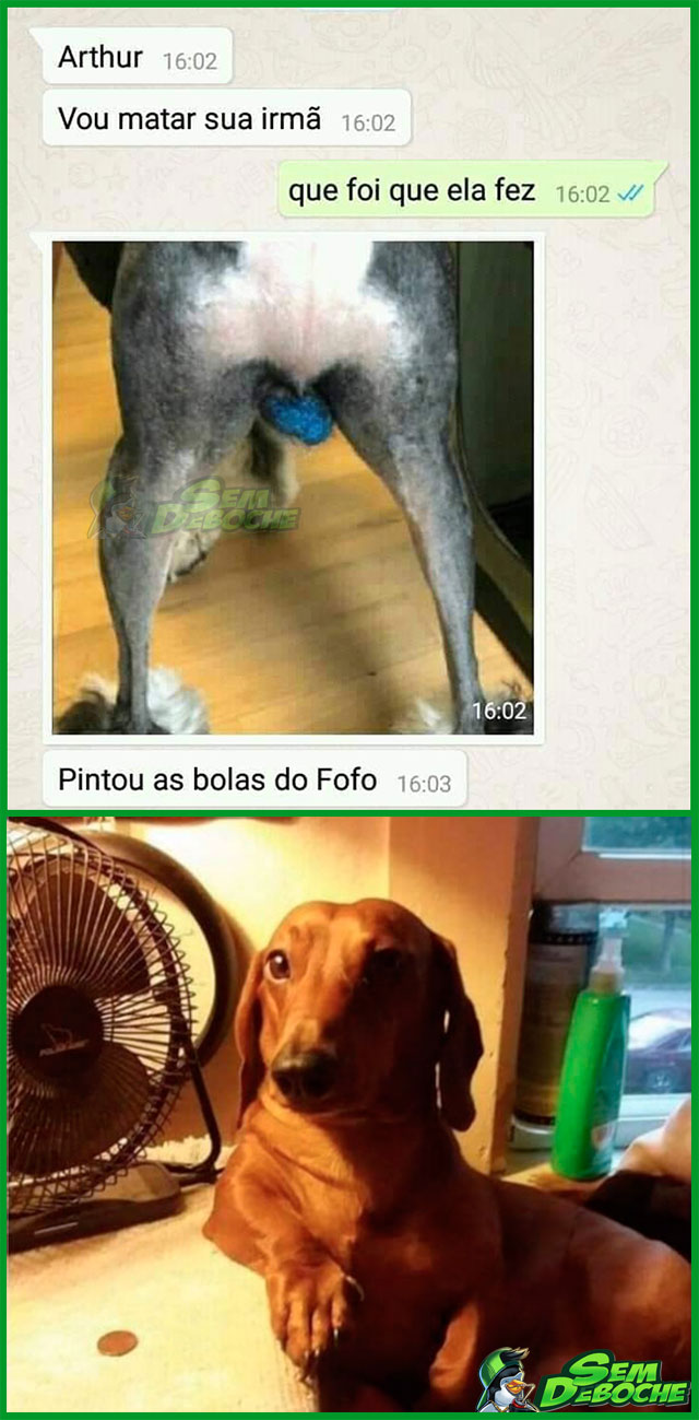 O CACHORRO DAS BOLAS AZUIS