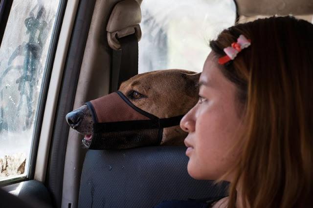 Трогательная история о девушке, которая спасает бездомных собак!