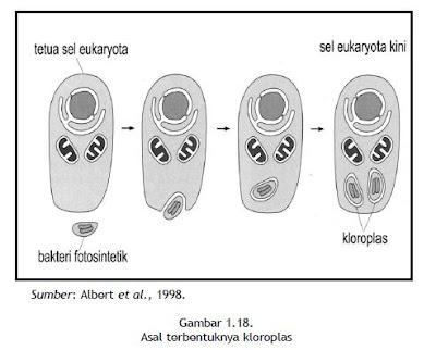Asal terbentuknya kloroplas