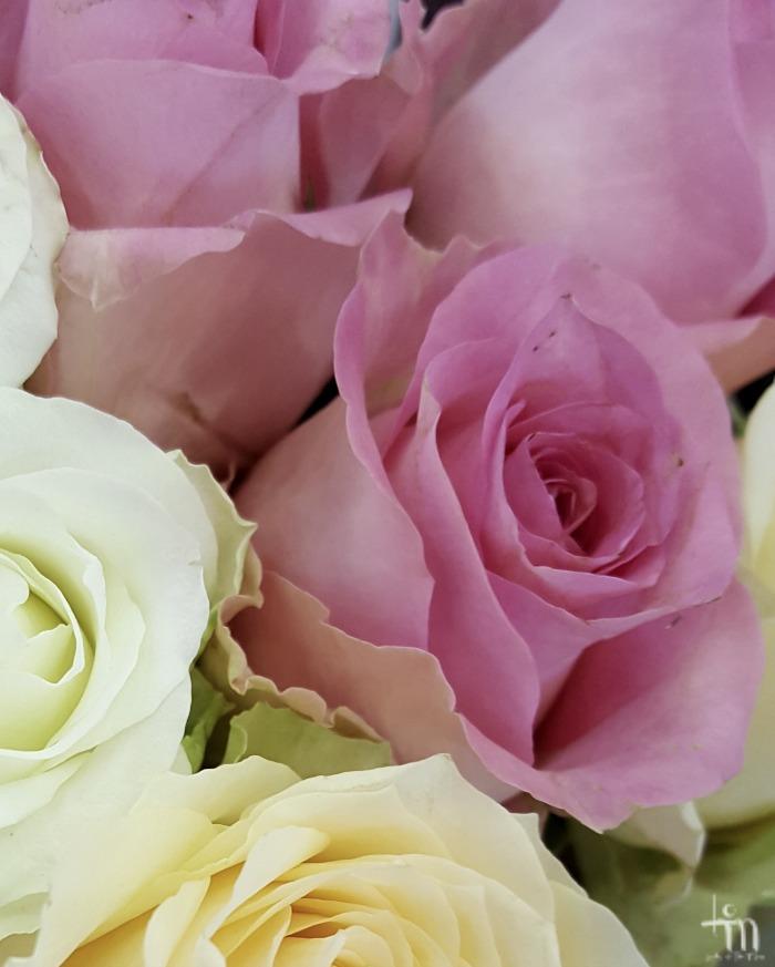 vaaleanpunaiset ruusut - light pink roses