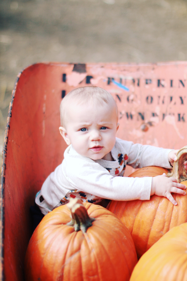 Best fall photo opp for babies: wheelbarrows at the pumpkin patch