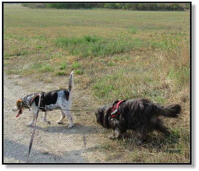 Zwei Hunde unterwegs