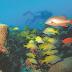 Pesquisas apontam, pelo menos, 200 espécies em Parque Marinho