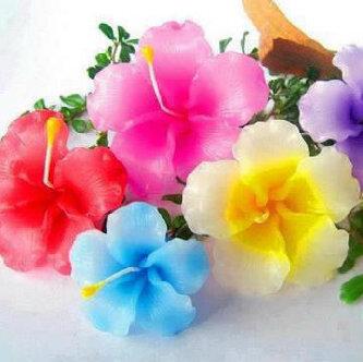 Kumpulan Gambar Bunga Warna Warni