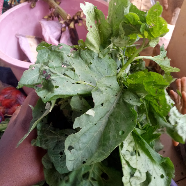Vegetables, huckleberry, njama-njama, cameroon, fresh, organic, green, farming