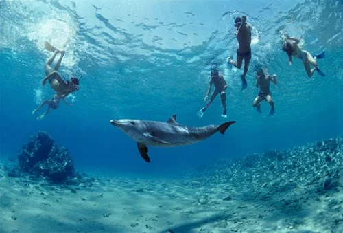 New Zealand prohibits guests from swimming with dolphins
