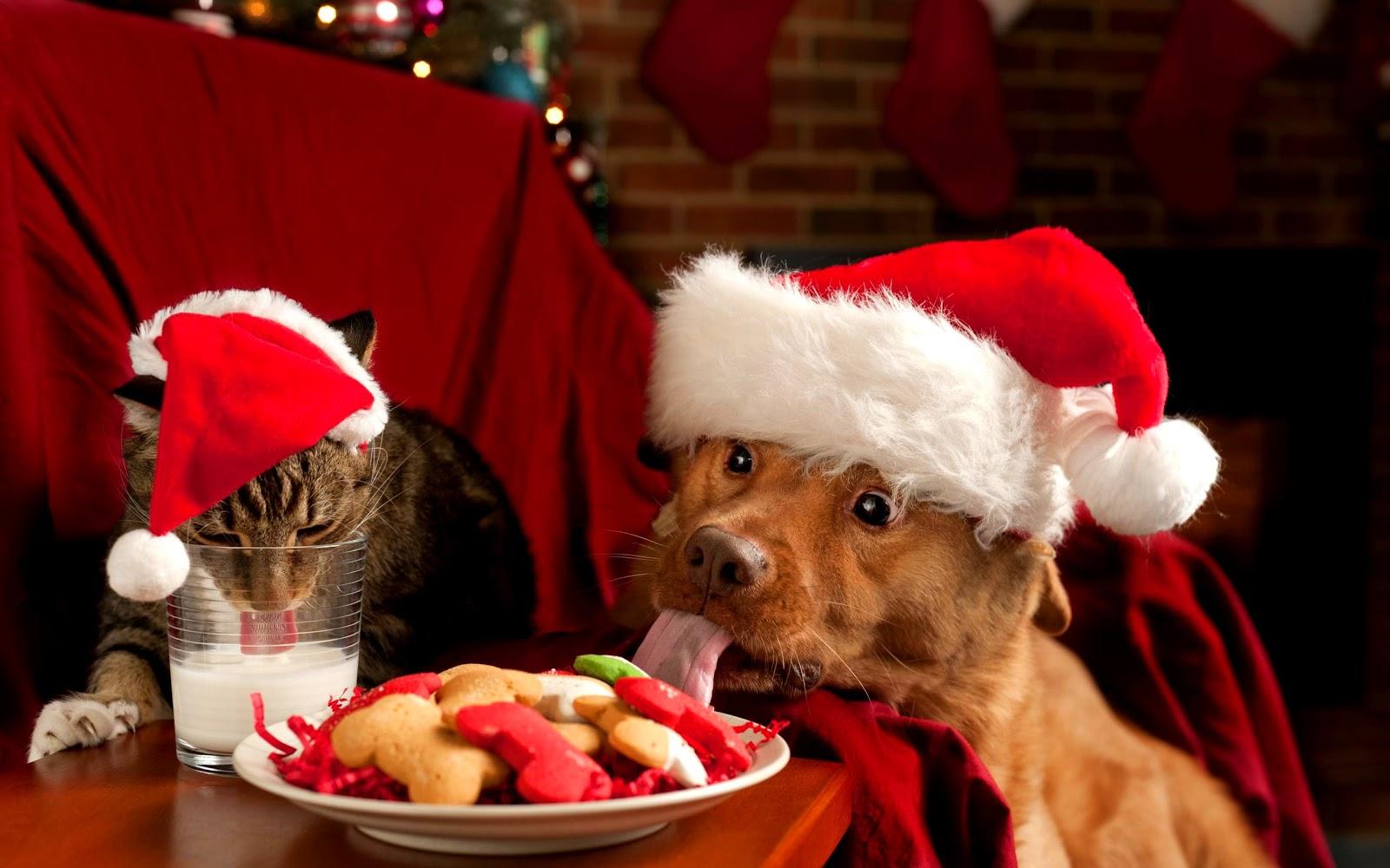cane e gatto, bicchiere, latte, piatto, cibo, cappello di babbo natale
