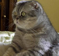 дневник кота в стихах