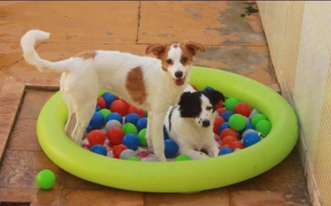 FERIADO | Hotelaria de pets tem lotação máxima