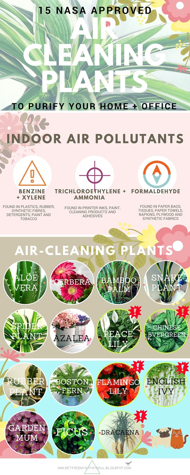 air cleaning purifying houseplants plant infographic nasa clean air