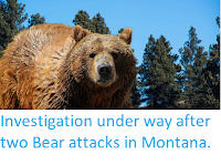 https://sciencythoughts.blogspot.com/2019/09/investigation-under-way-after-two-bear.html