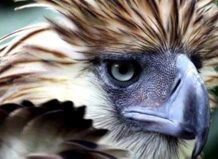 Burung Aneh di Dunia
