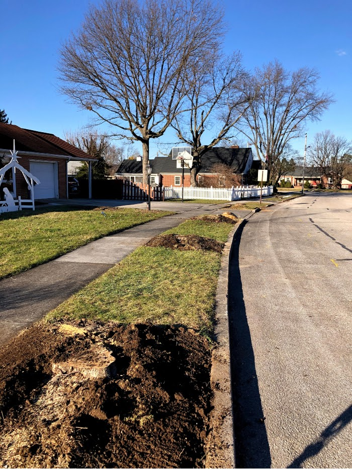 Trees removed near sidewalk