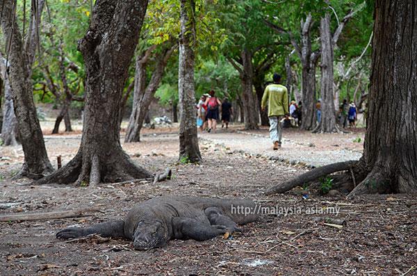 Trails Walking Path Komodo Island