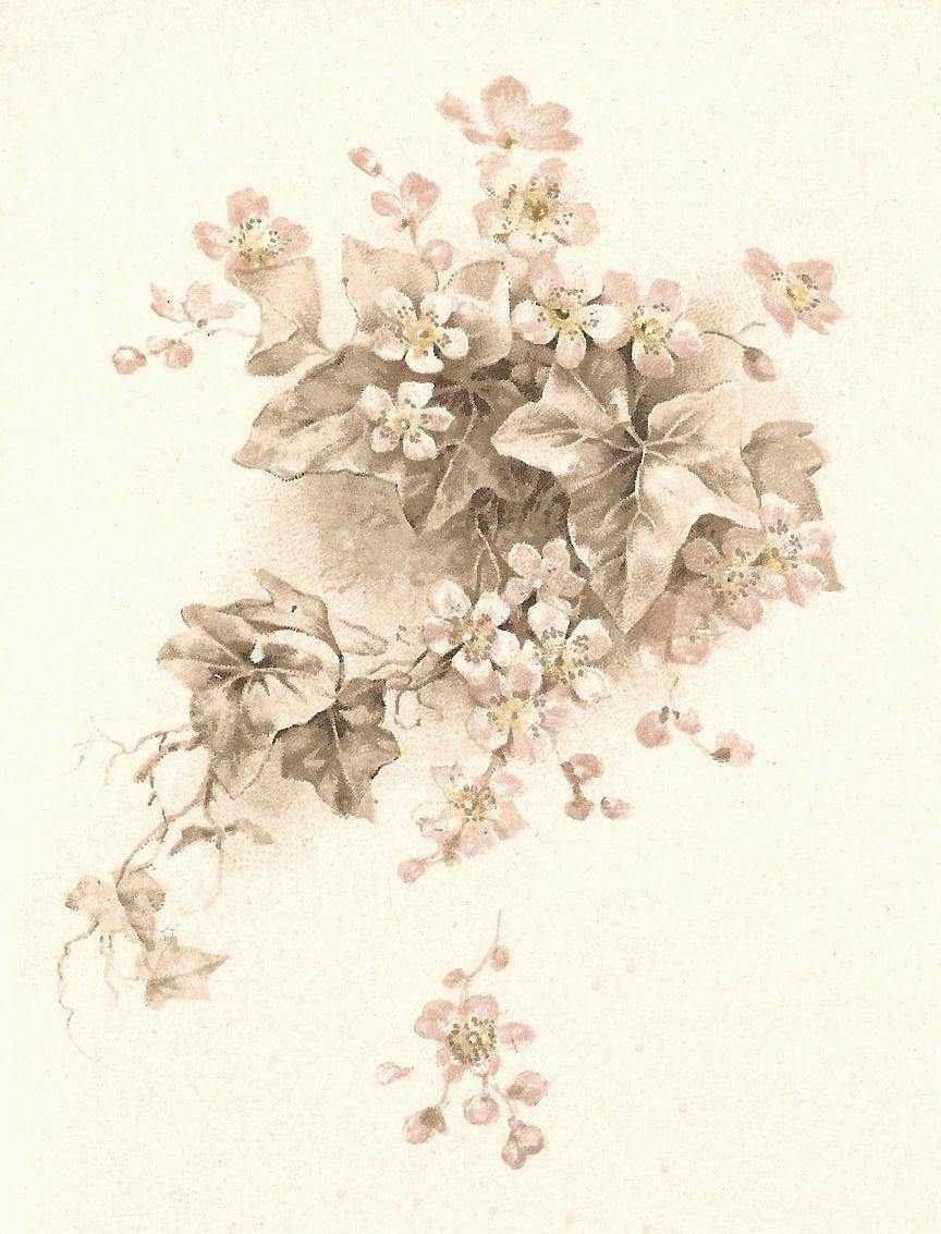Antique Images Free Flower Clip Art Vintage Illustration Of White