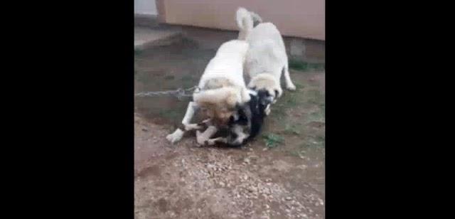 Plav: Maloljetnik mučio psa, a snimak objavio na mrežama