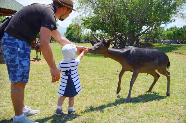 зоопарк черногория, черногория с детьми, черногория дети, петровац, будва, зоопарк