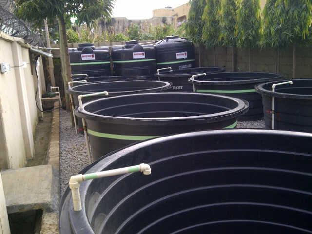 Naija women health blood money profit in fish farming for How to start a fish farm