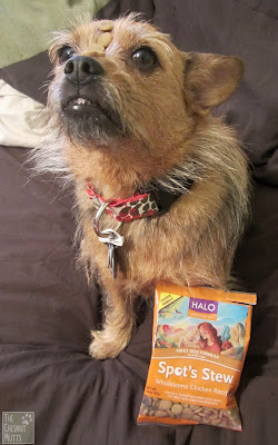 Jada and Halo Spot's strew dog food
