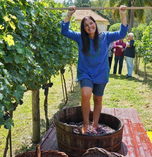 Vinícola Vaccaro: vindima, pisa da uva