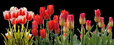 blossom like a flower